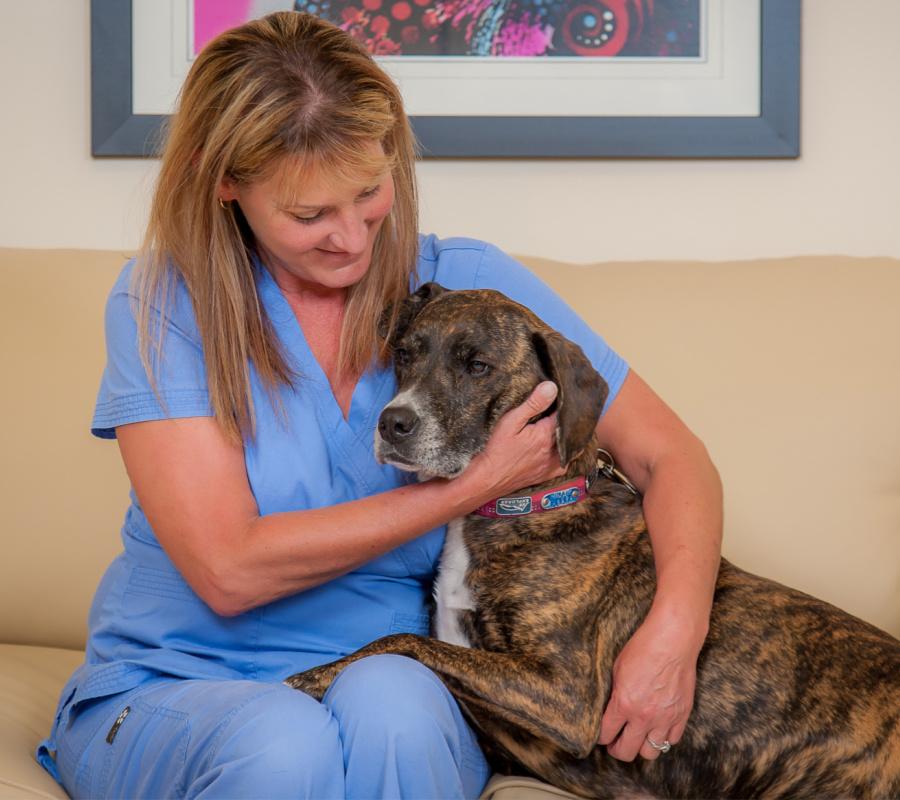 Staff hugging a dog